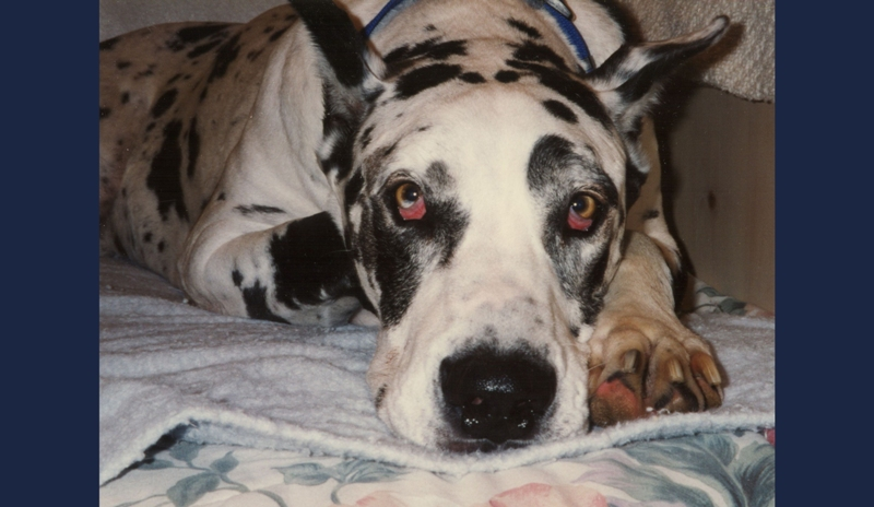 BUBBA DOG~ Rest in peace
